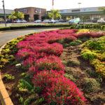 Garden_design_circle_at kolonade_retail_park_done_by_the_garden_group