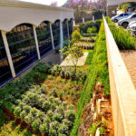 Garden_feature_at_Zuid-Afrikaans_Hospital_done_by_the_garden_group